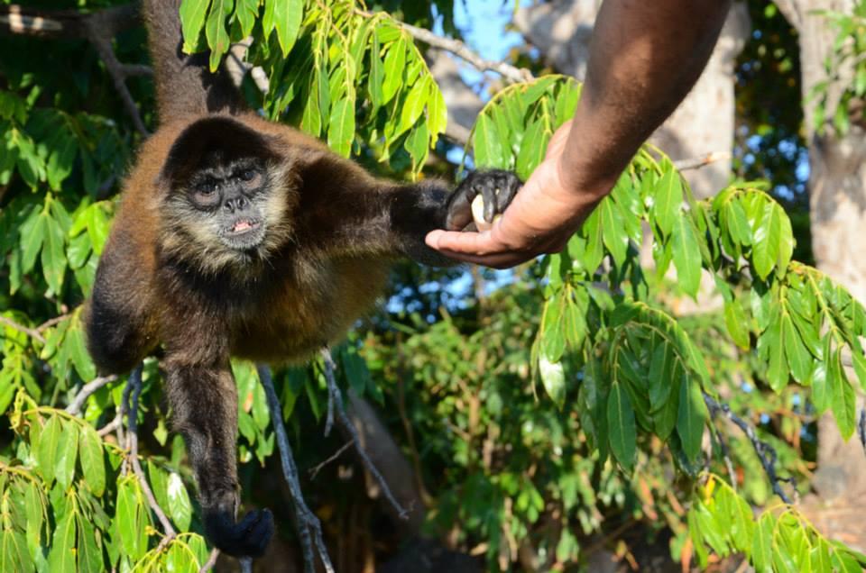 Monkey Island Nicragua