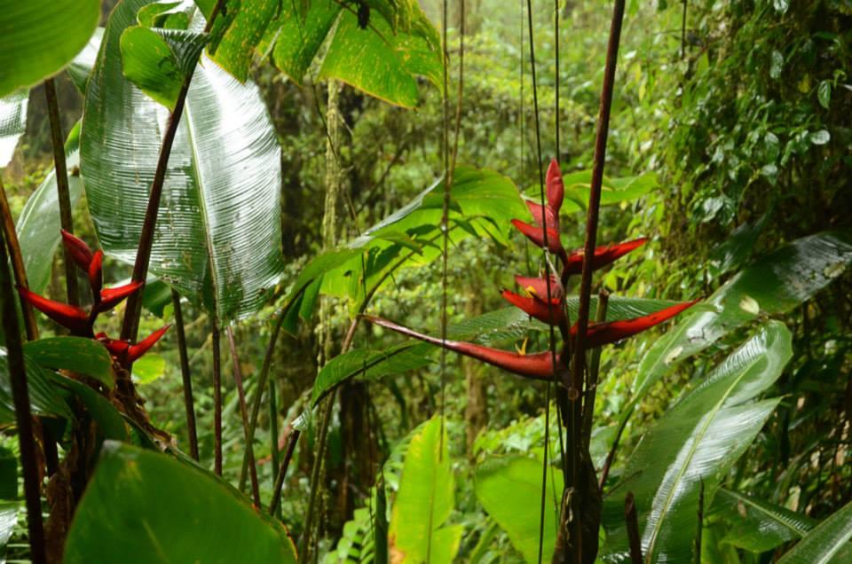 priroda-kostarika