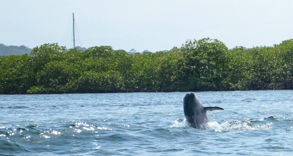 delfini-panama-bocas-del-toro